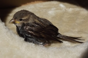 The little birdy from the water bucket.